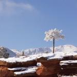 Pikes Peak, Mushroom Park